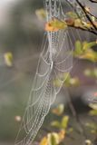 Mist in the Web Royalty Free Stock Photo