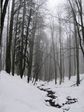 Mist in the winter forest Royalty Free Stock Images