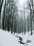 Mist in the winter forest royalty free stock photo