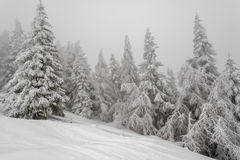 Mist in winter forest Stock Image