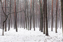 Mist in winter forest Royalty Free Stock Images