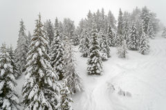 Mist in winter mountain forest Stock Photos