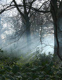 Mist in woodlands Stock Photography