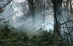 Mist in woodlands Stock Photos