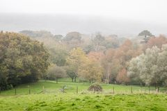 Mist in woods and fields in autumn Royalty Free Stock Photos