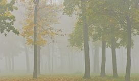 Mist and yellow tree foliage in autumn Stock Photos