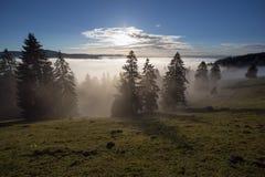 Mist in zwarte bosvallei, zuidwestenduitsland Stock Afbeeldingen
