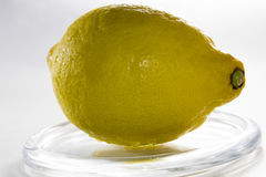 Misted cold lemon with droplets Royalty Free Stock Image