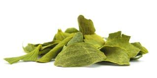 Mistel trocknete Blätter Stockbild