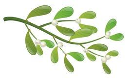 Mistelzweiganlage mit weißer Beere und grünem Blatt lizenzfreie abbildung