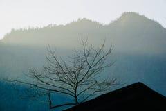 Misten i bergen döljas i vinter, och trädfilialerna sträcks kraftigt arkivbilder