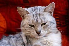 Mister Cat Stock Image