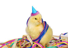 Mister party chick. Cute little chick is ready for a party Royalty Free Stock Photography