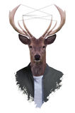 Misterdeer. Animals.I love this cool their appearances Stock Image