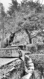 Misterio del parque viejo Imagenes de archivo