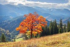 Misterio del ` s del otoño Imagen de archivo libre de regalías