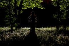 Misterio en el bosque Foto de archivo libre de regalías