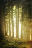 Misterious blurry forest. Dreamy background Stock Photography