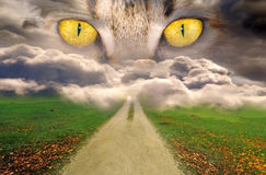 Misterious eyes. Yellow feline eyes watching your path Stock Photography