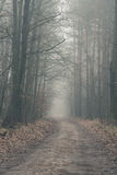 Misterious foggy forest Royalty Free Stock Photo