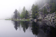 Misterious, foggy lake with pines Royalty Free Stock Photo