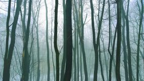 Misterious forest Stock Photography