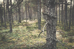 Misterious forest Royalty Free Stock Photo