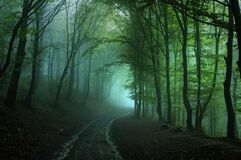 Misterious forest road on a foggy rainy day