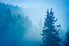 Misterious forest. Misterious winter forest with pines at the fog Stock Photo