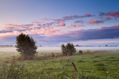 Misterious misty morning in Drenthe Stock Photography