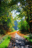 Misterious shady green alley with trees. In the park in Fulda, Hessen, Germany Royalty Free Stock Photos