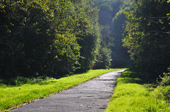 Misterious shady green alley with trees. In the park in Fulda, Hessen, Germany Stock Image
