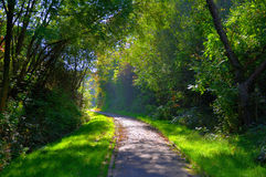 Misterious shady green alley with trees Royalty Free Stock Photos