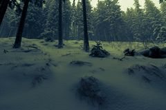 Misterious winter forest. With pine trees and snow stock photography