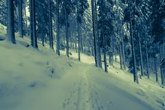 Winter forest landscape. Misterious winter forest with pine trees and snow stock photography