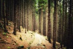 Misterius net bos met weg royalty-vrije stock foto's