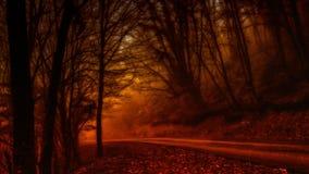 Mistero della foresta Immagini Stock