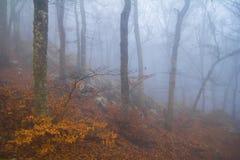 Mistero della foresta di autunno Immagini Stock Libere da Diritti