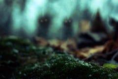 Mistero Forest Surreal Nature Landscape dei vermi immagine stock libera da diritti