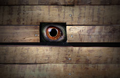 Mistery animal eye Stock Images
