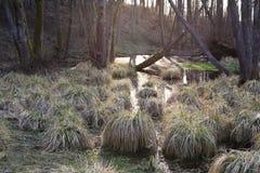 Mistic buskar som växer i vatten i träsk nära Marcinkonys, Lithua royaltyfri bild