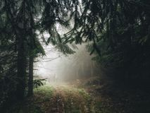 Mistic forest. Forest fog hiking trees Royalty Free Stock Photo