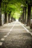 Mistic a pavé la route avec à deux lignes de l'arbre Photo stock