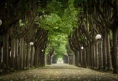 Mistic a pavé la route avec à deux lignes de l'arbre Photo libre de droits