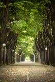 Mistic a pavé la route avec à deux lignes de l'arbre Images stock