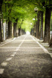 Mistic paved road with double line of tree.  Stock Photo