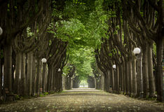 Mistic paved road with double line of tree.  Royalty Free Stock Photo