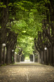 Mistic paved road with double line of tree.  Stock Images