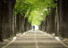 Mistic paved road with double line of tree.  Stock Image