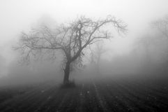 Mistica image, a rainy day Stock Photo